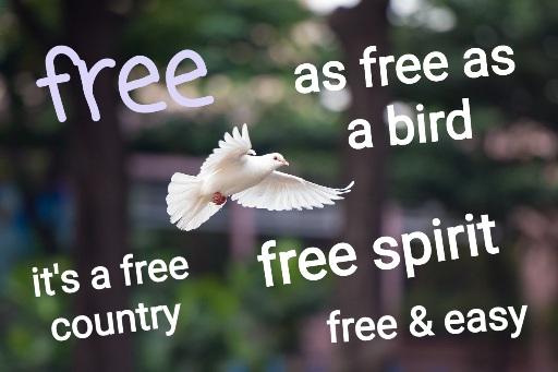 Free – frázy