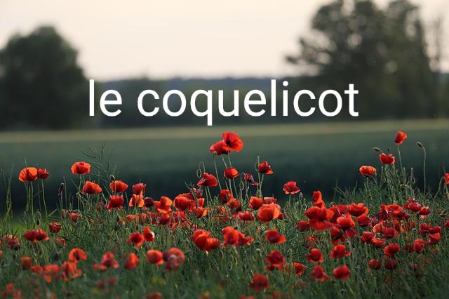 Začiatky s francúzskym jazykom… Mon Dieu!
